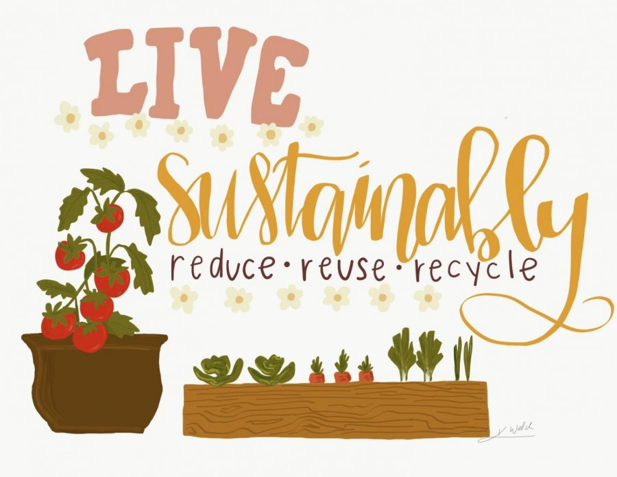 New Year, Same Earth: Going Sustainable and Reducing My Impact